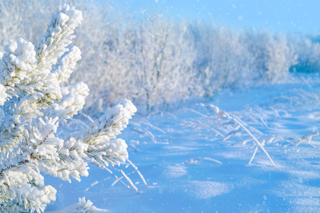 Winter landscape. Colorful winter landscape with snowy forest and snowdrifts Stock Photo