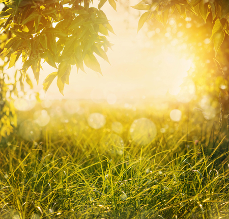 Summer natural background. Summer landscape with green grass and tree branches in the sunlight