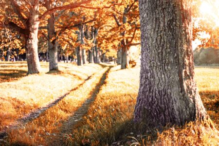 Autumn landscape. Alley of old oak trees on bright sunny day.