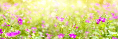 Summer bright background. Summer landscape with wildflowers of pink flowers in the sunlight.