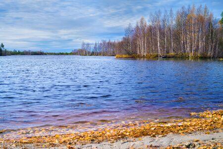 Autumn landscape. Fallen yellow autumn leaves on the lake.
