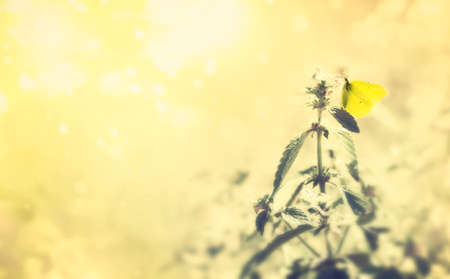 Summer scene with beautiful butterfly on field flowers. Summer bright background Standard-Bild