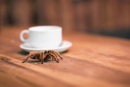 A tarantula and a cup of coffee. Drink in a bar with a wild hairy arachnid on a wooden table in Hanoi, Vietnam Stockfoto