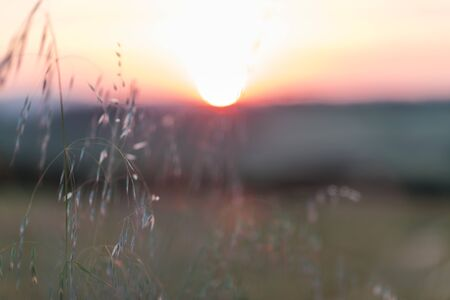 Sunset blur through blades of grass waving in the wind in Toscana, Italy