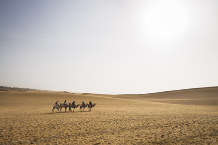 08 07 2016: Camels trekking tour in Gobi Desert, China. Camel caravan through sand dunes is a popular activity for tourists Imagens