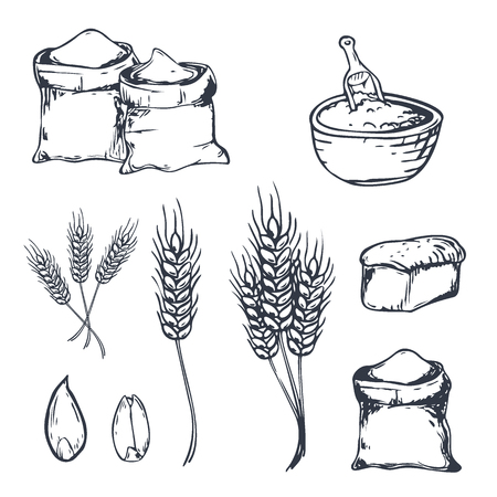 Bread hand drawn set with wheats. Vector illustration Illustration