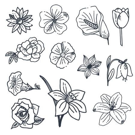 Collection de fleurs et plantes dessinées à la main. Illustrations vectorielles dans le style de croquis