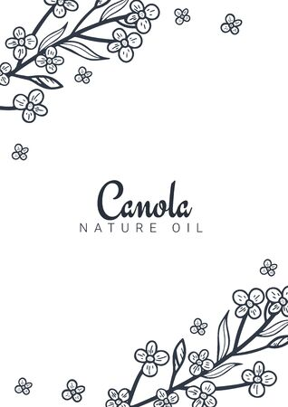 Rapeseed and canola oil banners. Nature Organic product.