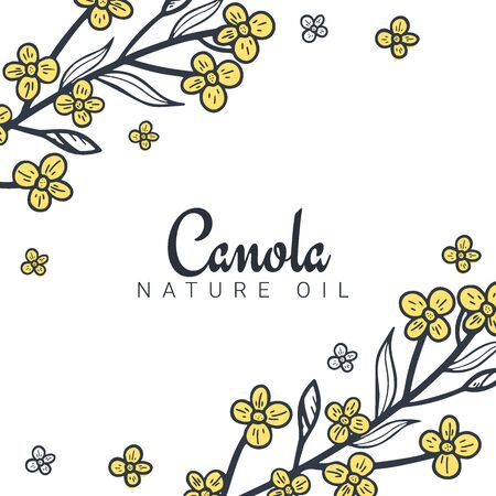 Rapeseed and canola oil banners. Nature Organic product. Stockfoto - 131466437
