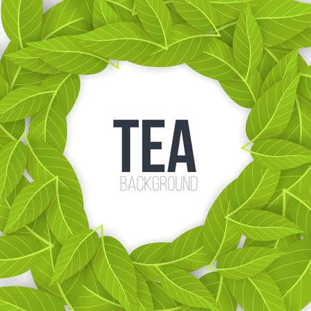Green tea leaves on white background. Vector Illustration.