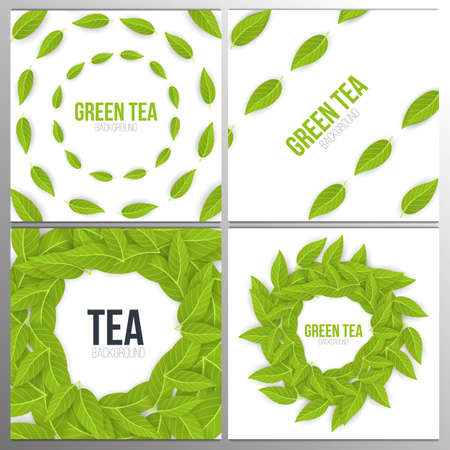 Set of banners Green tea leaves on white background. Vector Illustration.
