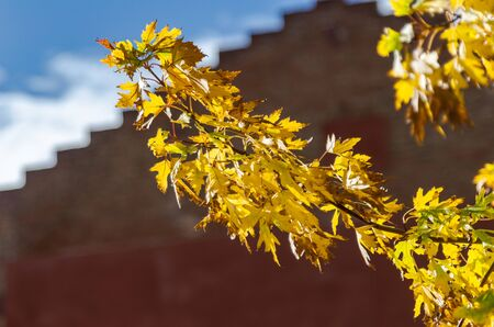trees with yellow leaves typical of autumn in Spain