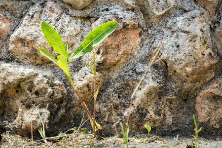 resilient plant growing between the cracks in the asphalt, concept Stock fotó