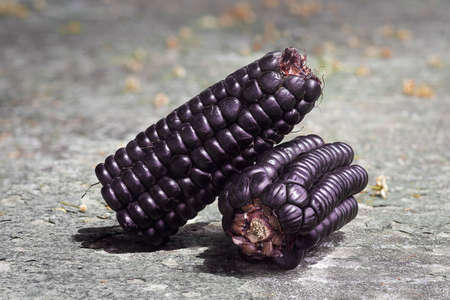 details of a peruvian purple corn, zea mays l, over a stone table on a sunny day. A product with high nutritional value 写真素材