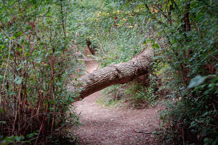 fallen and broken trees in a park blocking a path after a storm. Palencia, Spain