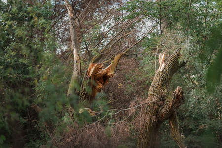 fallen and broken trees in a park after a storm. Palencia, Spain