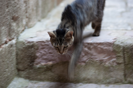Cat in old stown street of medieval town.