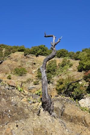 Dead tree on mount papandayan, garut, indonesia photo