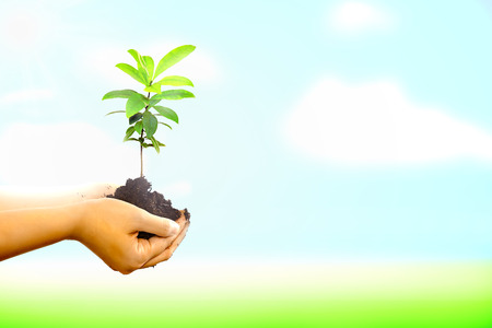 life giving birth: Woman hand holding a new tree over nature background. Concept about growing a new tree to save the world