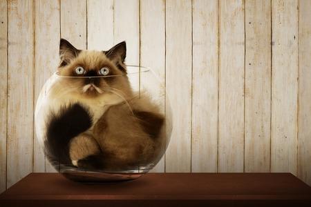 Simpatico gatto persiano all'interno ciotola di vetro sulla scrivania in legno Archivio Fotografico - 44051672