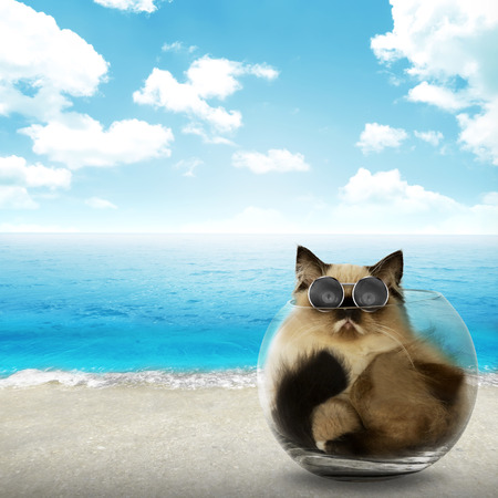 himalayan cat: Cute persian cat inside glass bowl with beach background