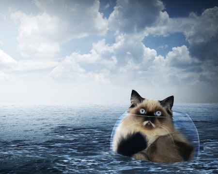himalayan cat: Cute persian cat inside glass bowl on the ocean with stormy weather