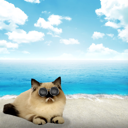 himalayan cat: Cute persian cat with beach and sky background Stock Photo