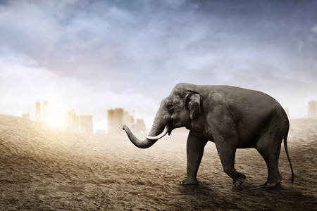sumatran: Sumatran elephant walk on the desert with city background Stock Photo