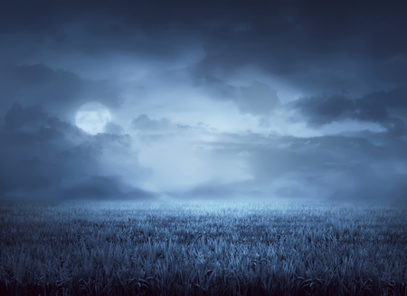 surrounds: Fog surrounds meadow at night in the moonlight