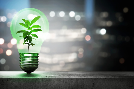 Green plant inside light bulb. Earth Hour Concept.