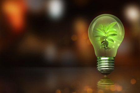 Small plant inside light bulb with blurred light. Earth Hour Concept.