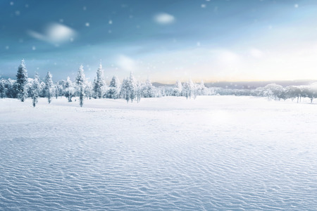 Landscape of snowy field with frozen trees at winter