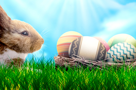 Colorful easter eggs in the nest and little bunny on grass with blue sky background. Happy Easter