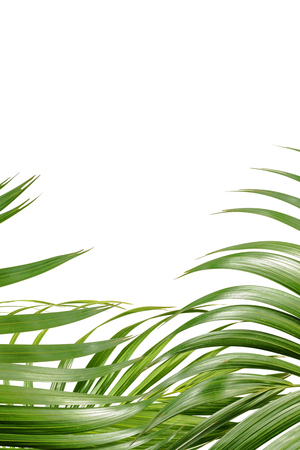 Palm branches with green leaves and space for text over white background. Palm Sunday concept