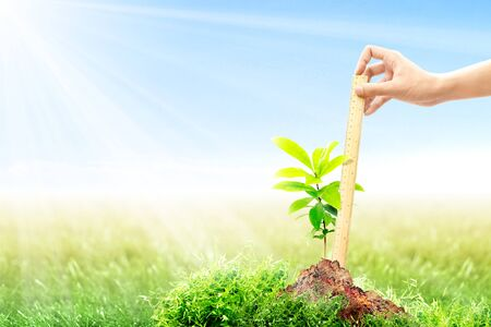 Female hand with a ruler measuring her growing plant height on fertile soil in meadow with sunlight and blue sky background. Earth day concept 免版税图像