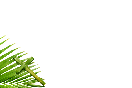 Cross shape of palm leaf with green leaves isolated over white background. Palm Sunday concept 免版税图像