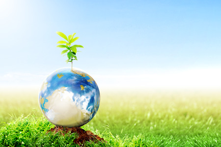 Earth with growing plant on fertile soil in meadow with sunlight and blue sky background. Earth day concept