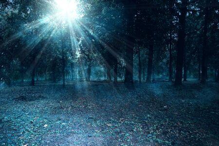 Bosque embrujado por la noche con niebla sobre fondo claro de luna. Fondo de halloween