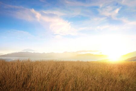 Dry grass field with sunlight over blue sky background