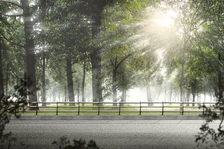Asphalt road on the green forest with sunlight background Stockfoto