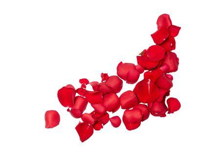 Pétalos de rosas rojas aisladas sobre fondo blanco.