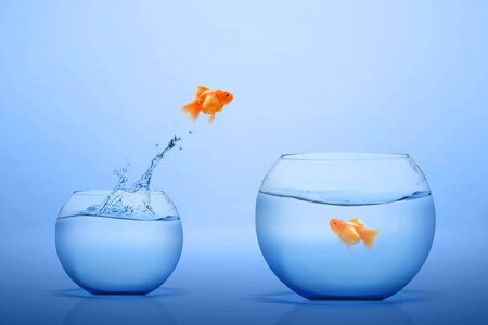 Goldfish jumping out into a bigger fishbowl with blue background Banque d'images