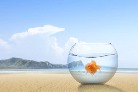 Goldfish in the fishbowl on the sandy beach with a blue sky background