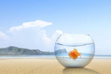 Poisson rouge dans le bocal sur la plage de sable avec un fond de ciel bleu Banque d'images