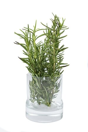 Rosemary on the glass plant pot isolated over white background