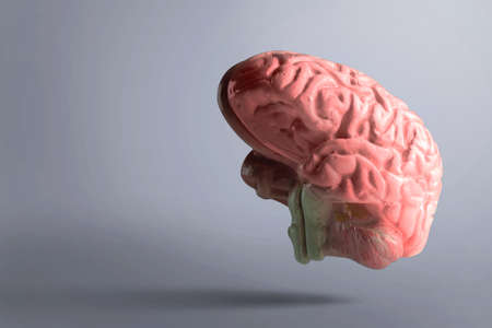 The human brain with black background