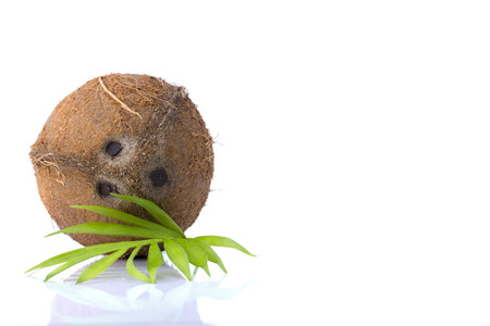 Coconut with leaves on a white background photo