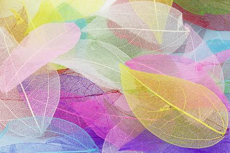 Macro hojas de textura de fondo Foto de archivo - 30703639