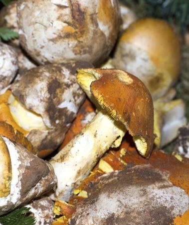 caesarea: amanita caesarea at market in la spezia