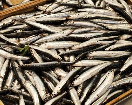 anchovy in a market in la spezia Foto de archivo